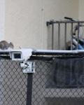 Академия тенниса во Флориде